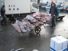2005tsukiji_market-5