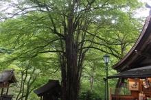 Biwakifuneohara41